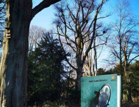 Prodigium - Anca Moraru - Literpress Publishing